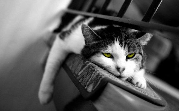 Lazy-cat-sleeping
