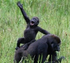 waving monkey