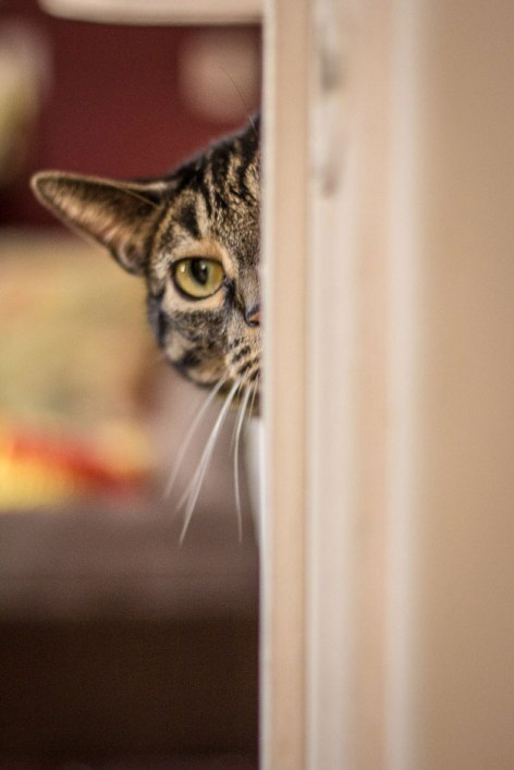 sneaky-cat - www.megankhichiphoto.com