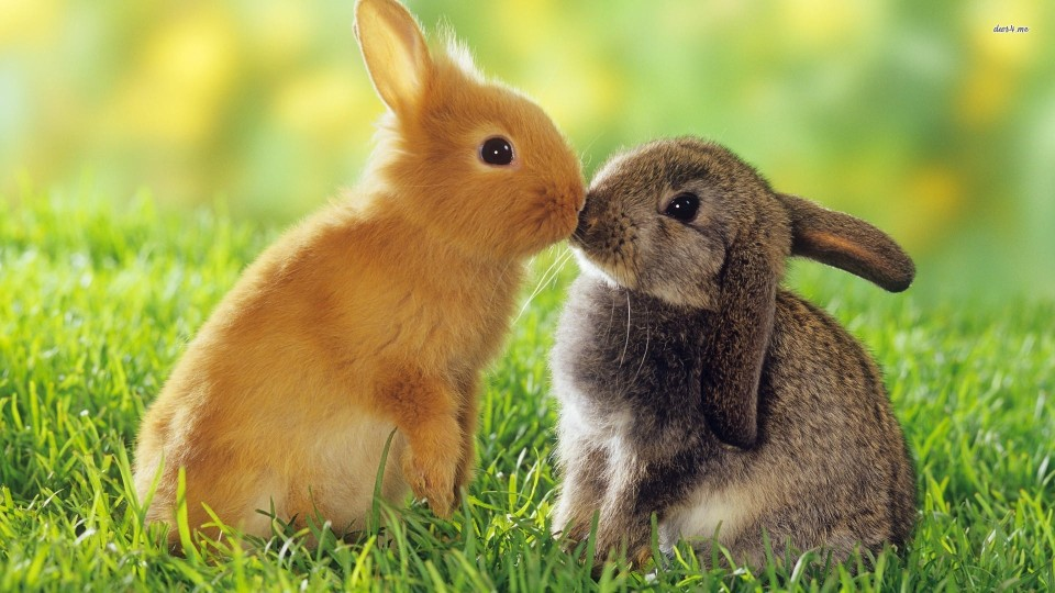 bunny-love