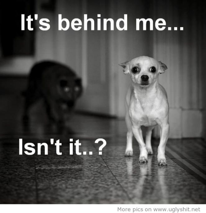 Scared-Dog-Thinking-Of-Cat-Enemy-Funny-Picture