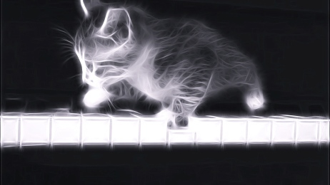 Cat on Piano, Music, kitty art photo