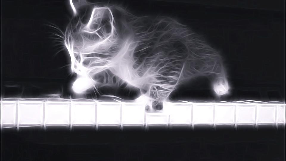 Cat on Piano, Music, kitty art photo