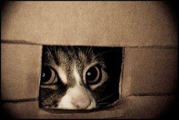 bold-kitty-cat