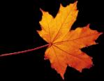 fall leaves autumn