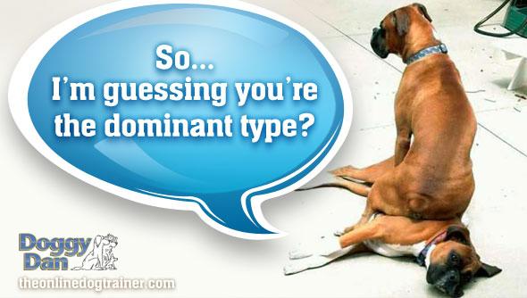 Doggy-Dan-dominant-dog-play1